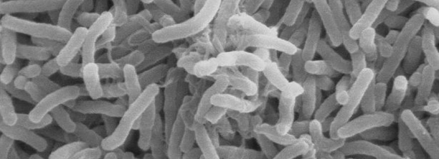 Violence is like Cholera: A Contagious Disease