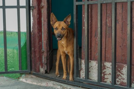 The guard dogs of our criminal justice system: oversight on police and justice